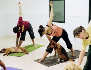 dog-yoga-doga.jpg