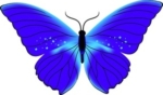 purple-butterfly-clip-art-42941-150x88.jpeg