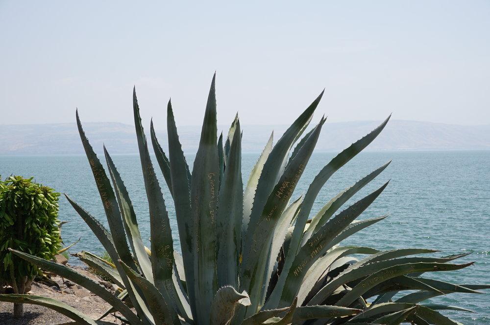 Capernaum-Sea of Galilee Israel 1.JPG