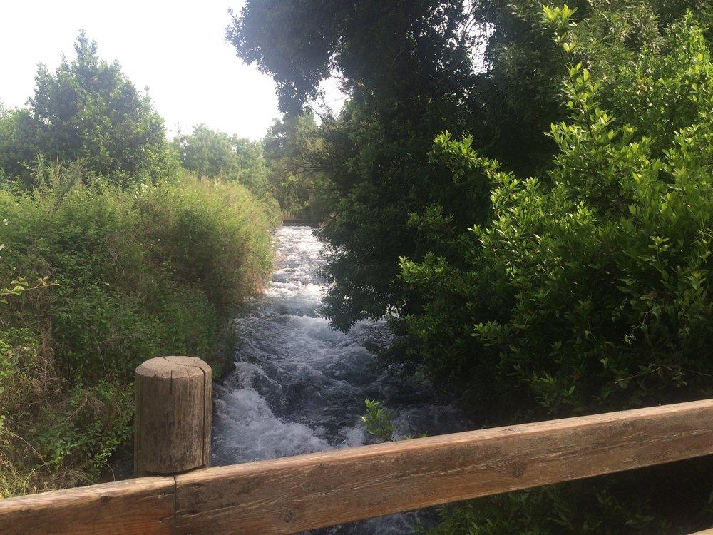 Dan River Dan Israel.jpg