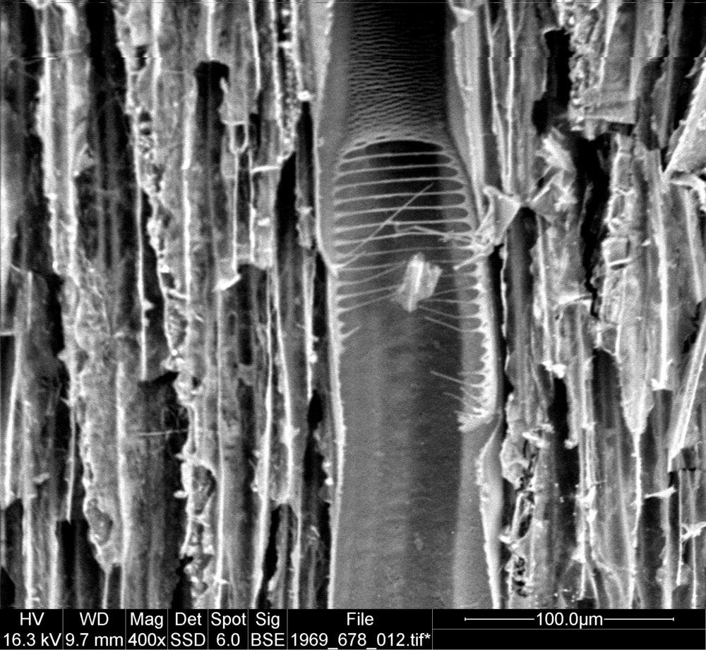 Sclariform perforation plate