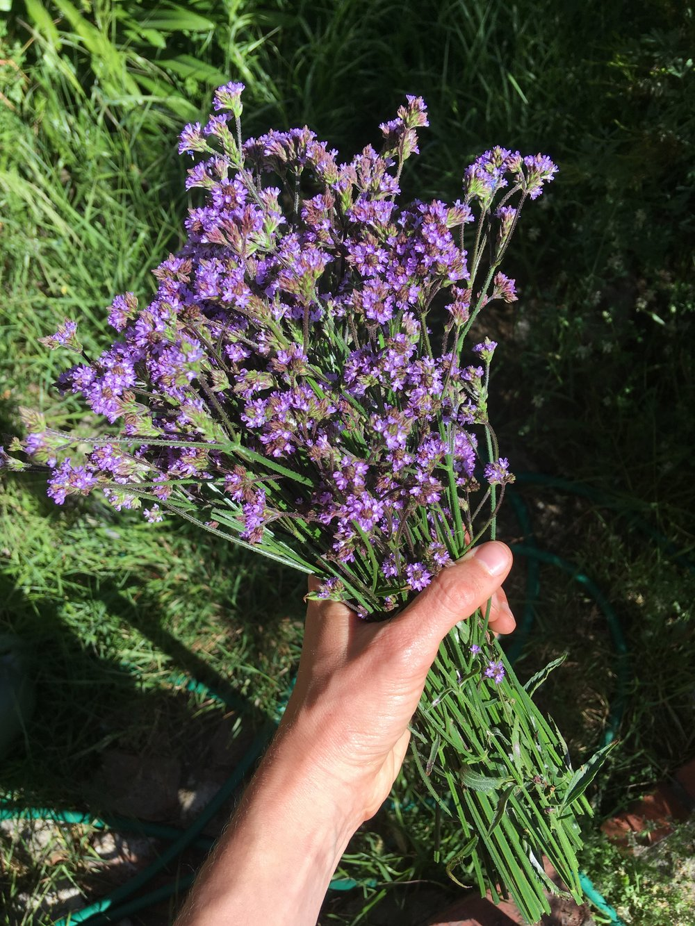 Stunning blue vervain, an essential ingredient in my Wild Mind elixir, and an indispensable ally navigating the pressures of self-imposed expectation. Welcome relaxation, receptivity & presence with this divine consciousness shifting elixir. This herbal remedy was crafted with intention to channel freedom, ease & openness with blue lotus, blue vervain, mugwort & lavender.  Read more...