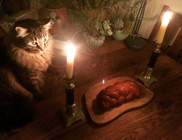 Shabbat Shalom & happy solstice!