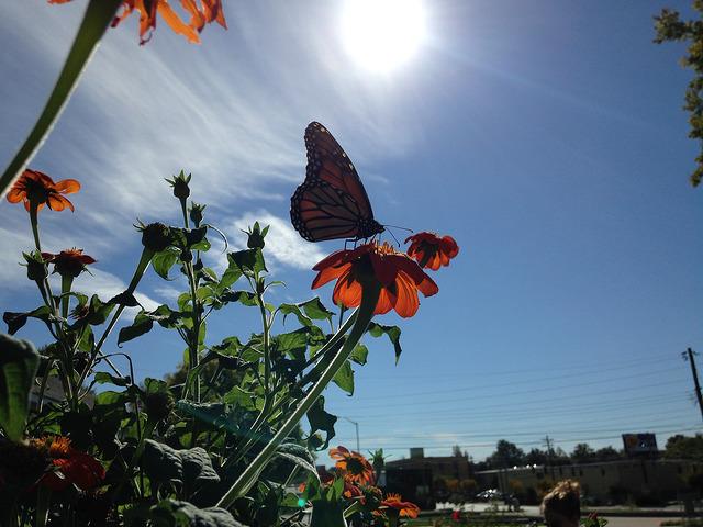 butterfly in sun.jpg
