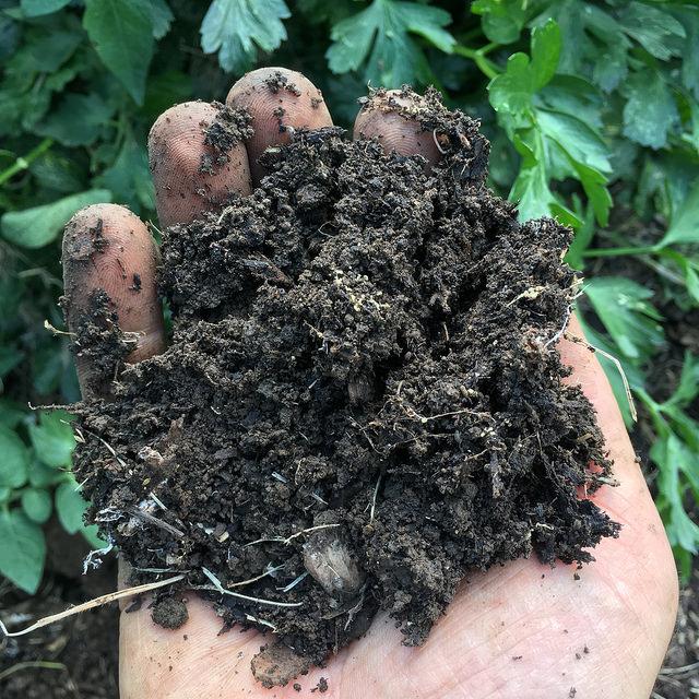 healthy dirt.jpg