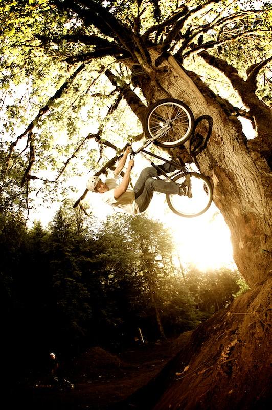 Looch_tree.jpg