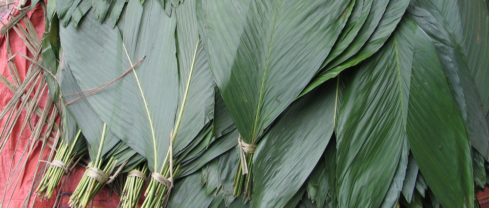 A Bundle of Xate leaves