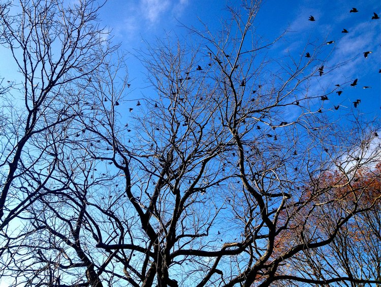 deb-walsh-blog-q-cards-birds-branches.jpg
