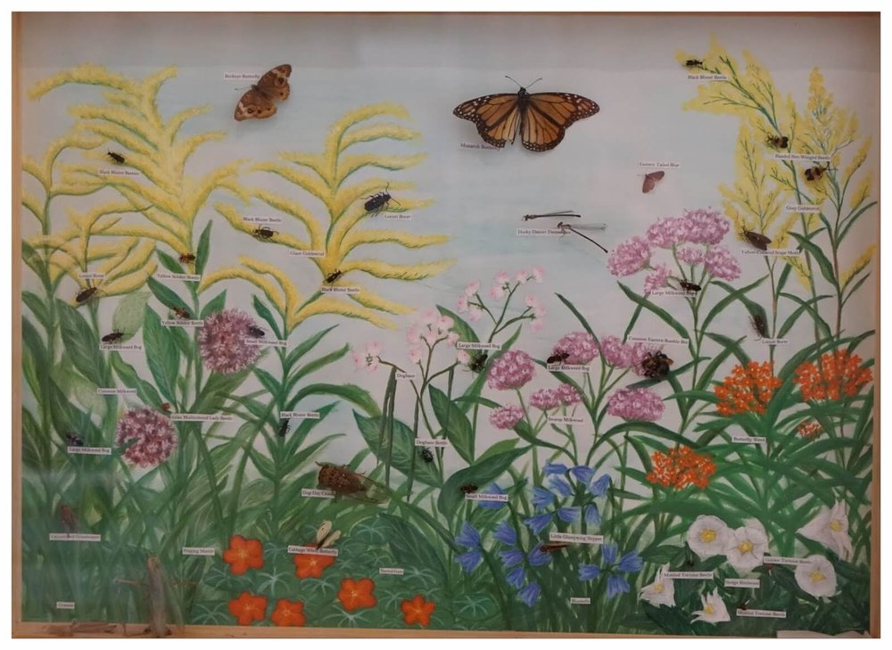 Butterfly Display.JPG
