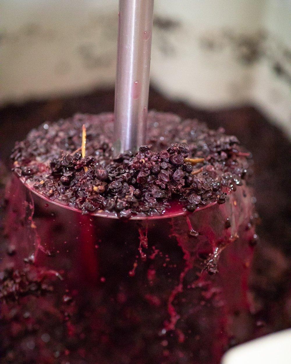 Darling+Wines+-+Petaluma+Gap+Harvest+2018+-+Small+Size+%2889+of+91%29.jpg
