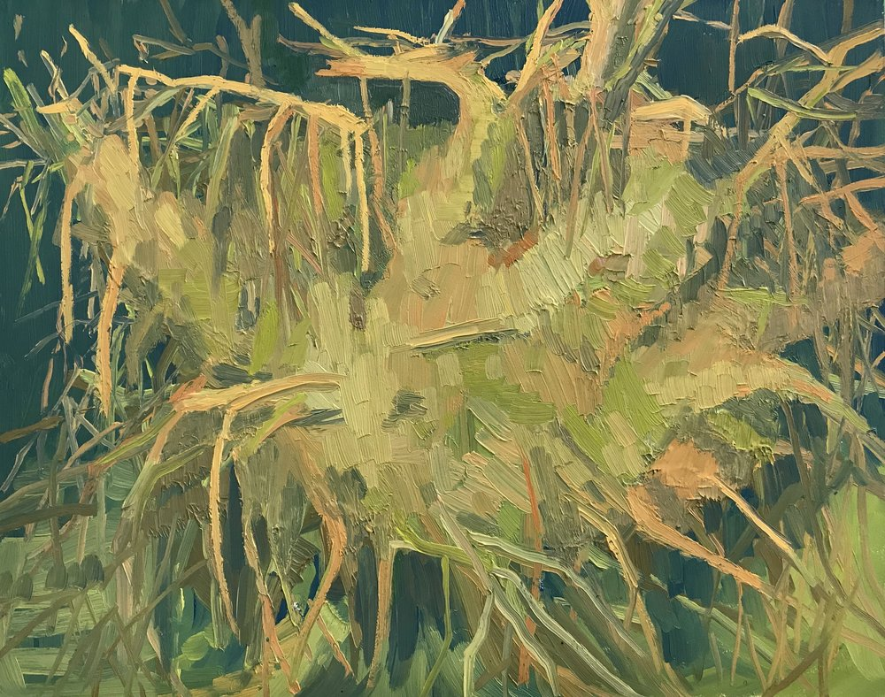Roots, Oil on Panel 10 inches x 12 inches 2018