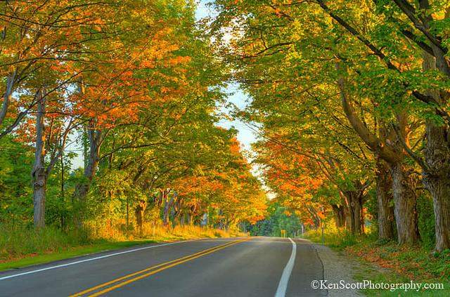 ken-scott-fall-road.jpg