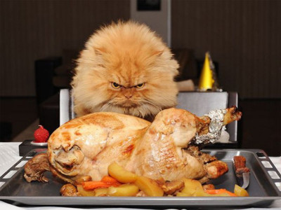 happy-thanksgiving-funny-pictures-e1448306080282.jpg