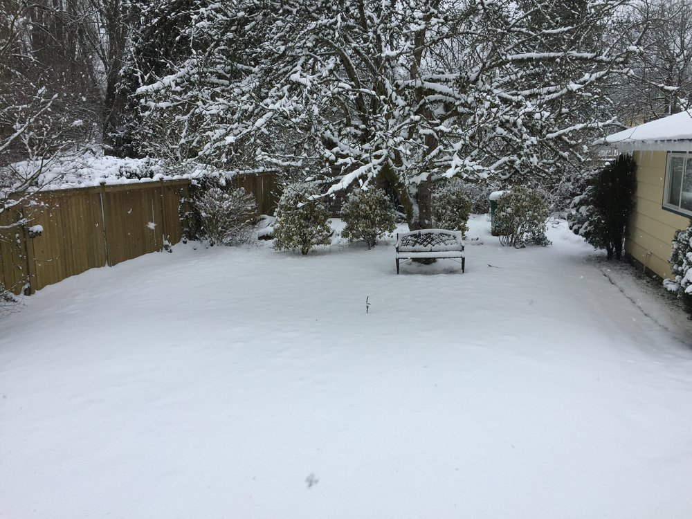 A no-school snowfall hits Seattle.