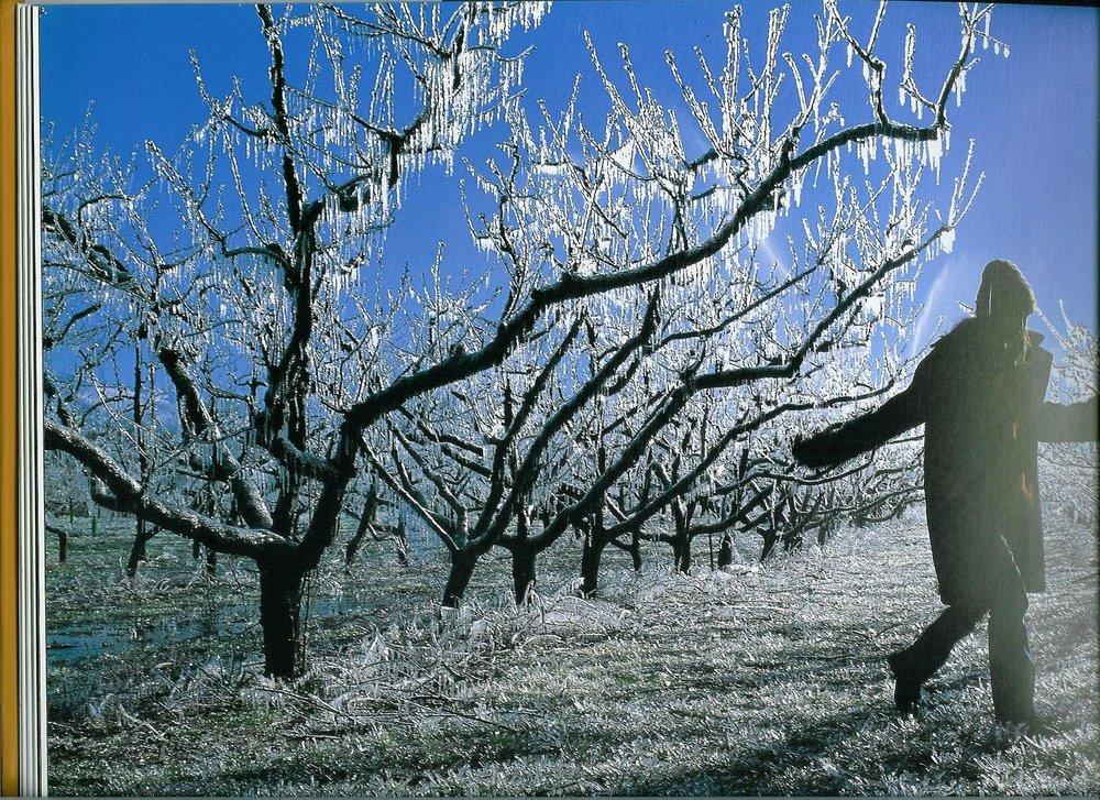 winter1.jpg.jpg