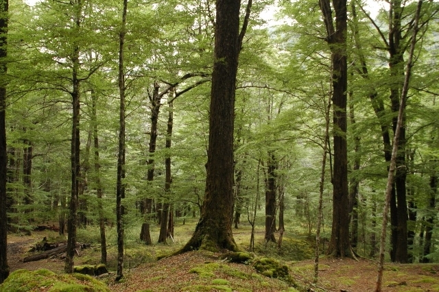 ForestMdm.JPG