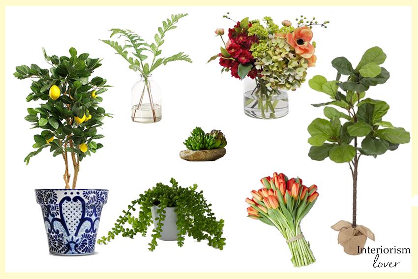 Opciones de plantas y flores |  Plants and flowers ideas