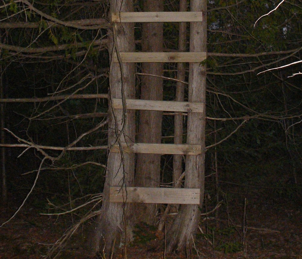 tree-stand-rungs.JPG