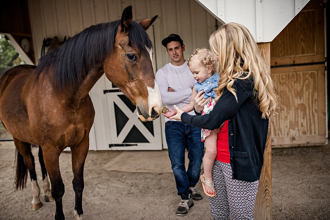 family session with horses
