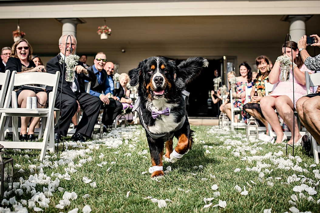 dog walking down the aisle