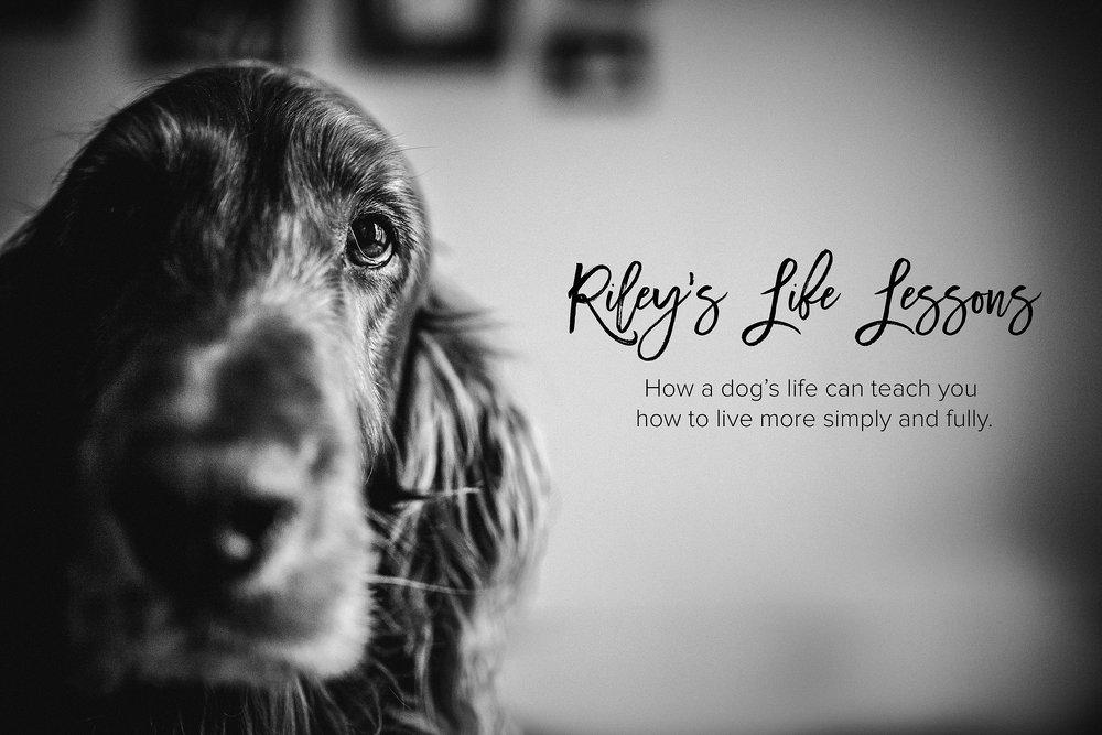 A-Dogs-Life-Irish-Setter_0001.jpg