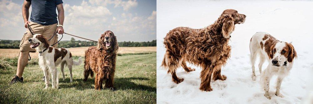 A-Dogs-Life-Irish-Setter_0007.jpg