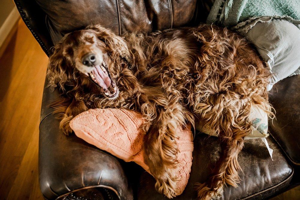 A-Dogs-Life-Irish-Setter_0005.jpg