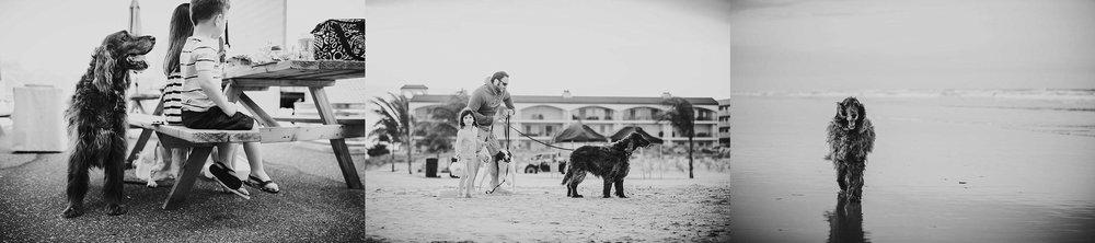 A-Dogs-Life-Irish-Setter_0010.jpg