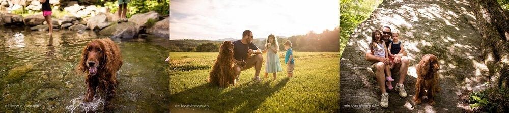 A-Dogs-Life-Irish-Setter_0015.jpg