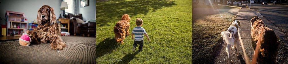 A-Dogs-Life-Irish-Setter_0013.jpg