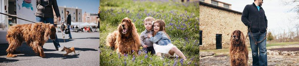A-Dogs-Life-Irish-Setter_0016.jpg