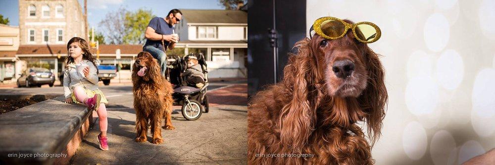 A-Dogs-Life-Irish-Setter_0017.jpg