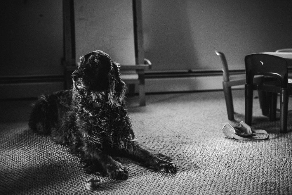 A-Dogs-Life-Irish-Setter_0004.jpg