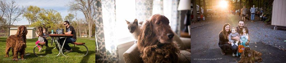 A-Dogs-Life-Irish-Setter_0019.jpg
