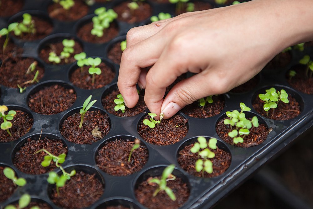 Seed, tools, soil and compost - Here we run through: different types of seeds & local seed producers; which tool is best for which activity and where to source; how to compost.