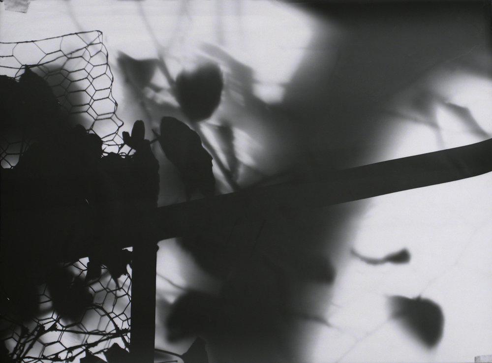 Maschendrat mit Laub, Fotogramm
