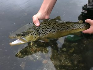 BluefinTV-Fly-fishing-hampshire2-IMG_1175-300x225.jpg