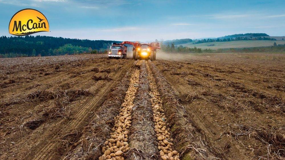 potato harvest .jpg