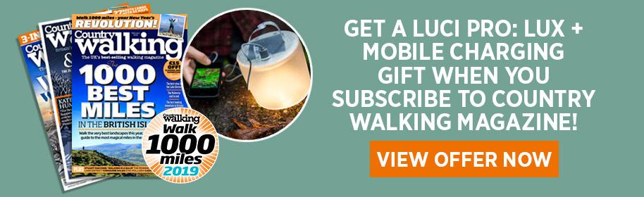 CW-WalktheWalk-website.jpg