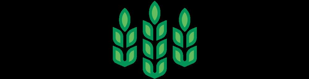 cornocopia, corn stalk, leaf getting bigger