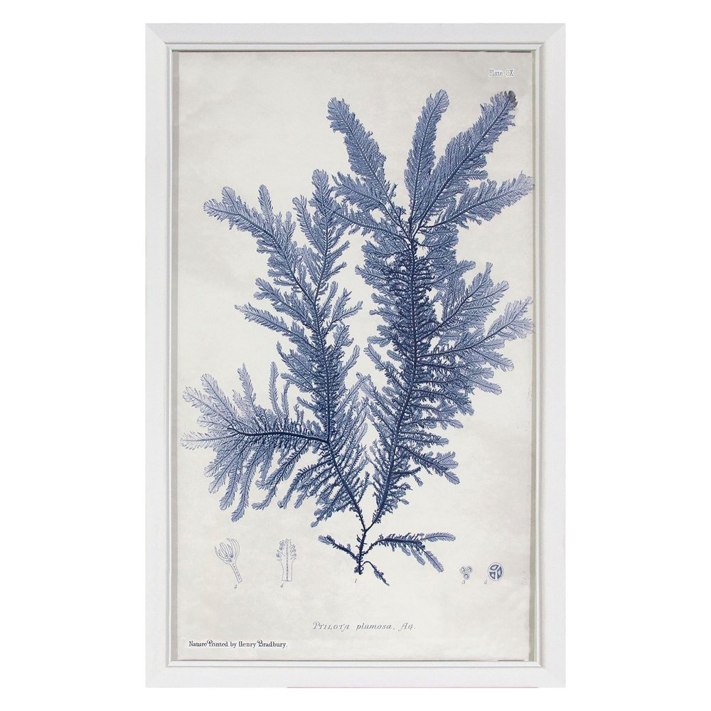 Blue Coral Plant Framed Wall Art - $16.99