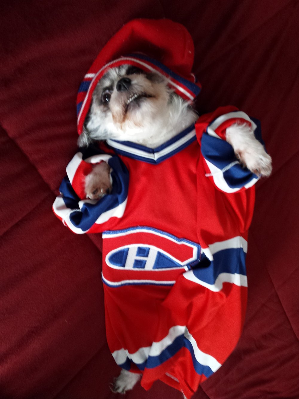 Lucky cheering the Habs.JPG