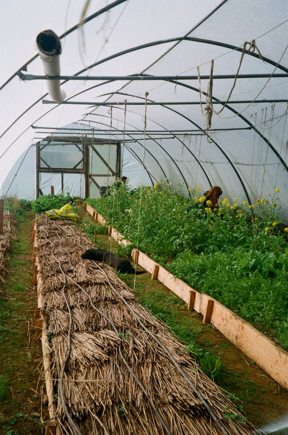 polytunnel for veg.JPG