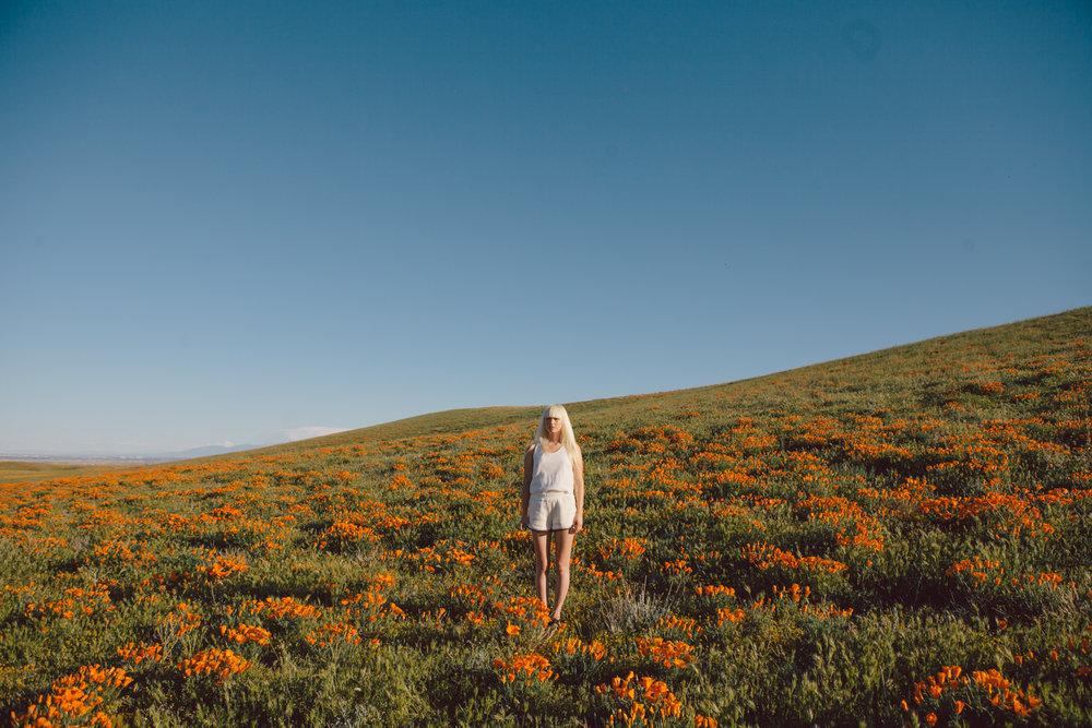Poppys_003.jpg