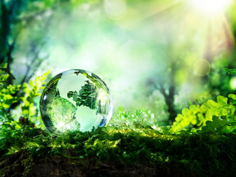 Usa-globe-resting-in-a-forest---environment-concept-473454180_1185x887.jpeg