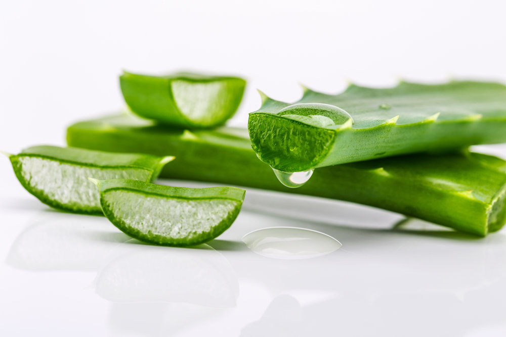 aloe vera carolina levie purefood.jpg