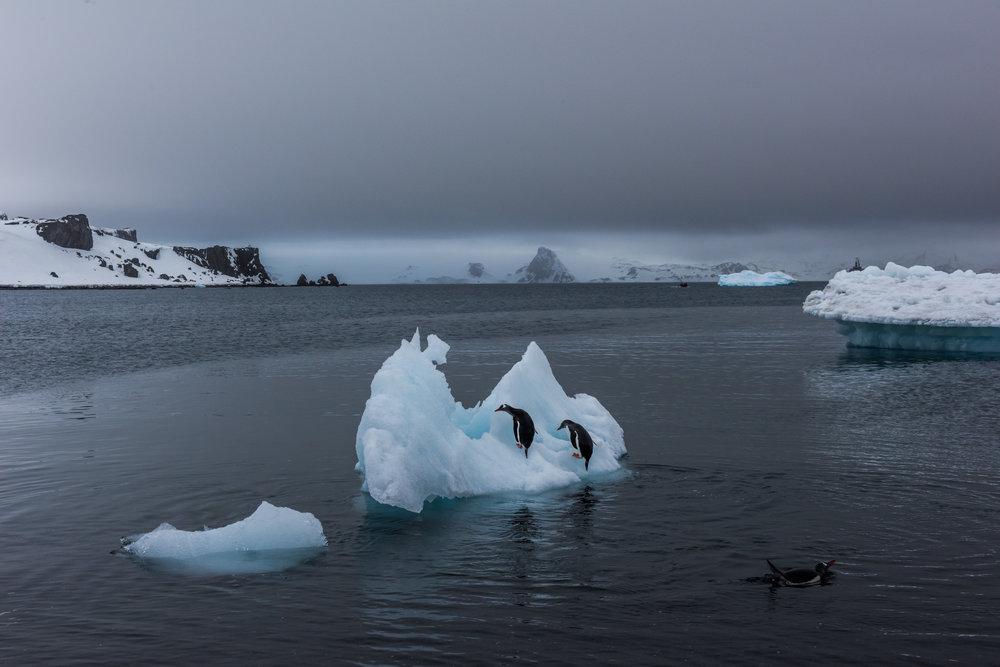 2015_11_27_DB_Antarctica_01068.jpg