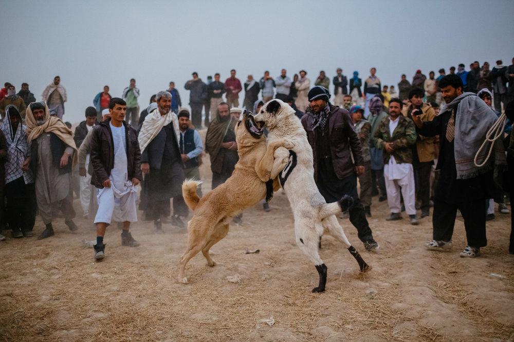 2012_11_16_DB_Afghan_2021.jpg