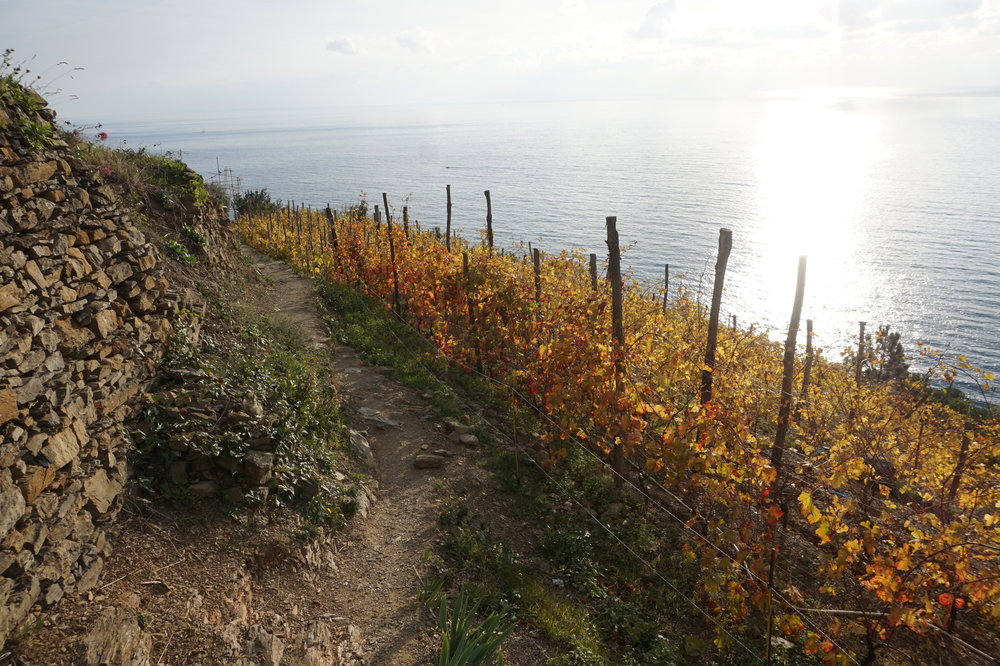 UNESCO HERITAGE-LISTED VINES BETWEEN CORNIGLIA AND MANAROLA