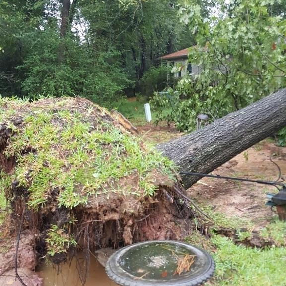 emergency uprooted tree 77304 77306 77318 77316 77354